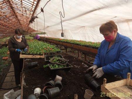 У Житомирі незабаром висадять 75 тисяч квітів