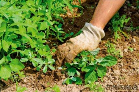 Чим захистити рослини від шкідників та хвороб?