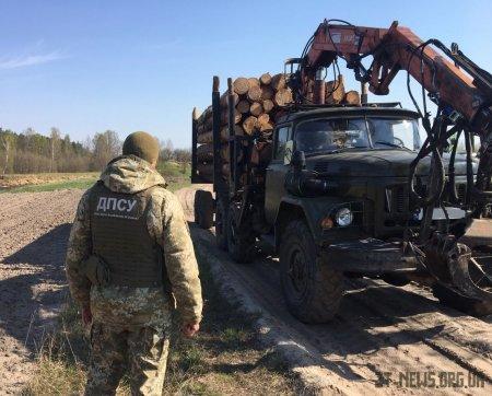 На Житомирщині прикордонники виявили незаконну порубку та крадіжку лісу