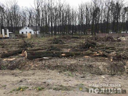 У Житомирському районі викрили чоловіка, який незаконно вирубав дерева