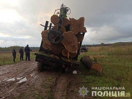 Лугинські правоохоронці затримали вантажівку з нелегальним лісом