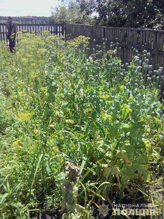 На Олевщині поліцейські вилучили в місцевих жительок понад дві сотні нарковмісних рослин