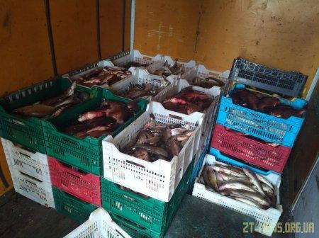 Прикордонники Житомирського загону виявили автомобіль з вантажем риби, яку перевозили з порушеннями