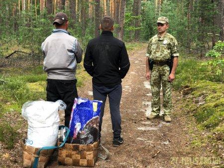 40 кілограм чорниці зібрали двоє чоловіків в Чорнобильській зоні