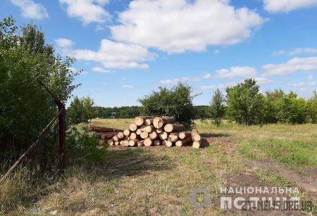 Коростишівські правоохоронці викрили пилораму з необлікованим лісоматеріалом