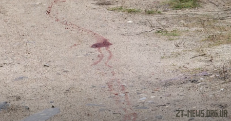 На Житомирщині невідомі застрелили чотирьох собак