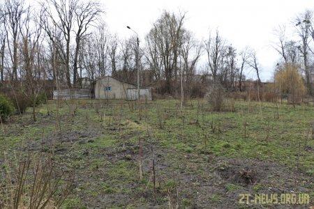 1000 нових дерев з'явиться у Житомирі