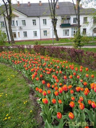 Поблизу пам'ятника жертвам Голодомору вкрали нещодавно висаджені тюльпани