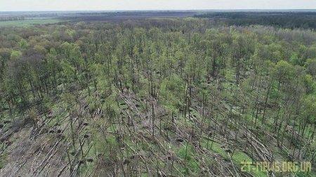 На Житомирщині смерч пошкодив 20 гектарів лісу