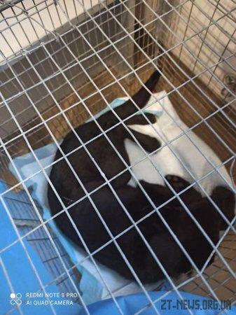 У Житомирі подружжя викинуло собаку з вікна 3-го поверху