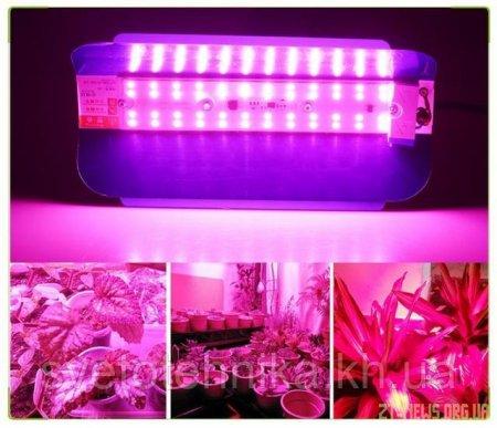 Як вибрати фітопрожектор для рослин