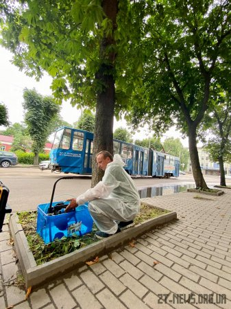 Працівники Зеленбуду у Житомирі лікують каштани від мінуючої молі