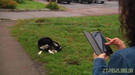 У Житомирі триває підрахунок вуличних собак